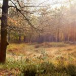 herfst wandeltocht